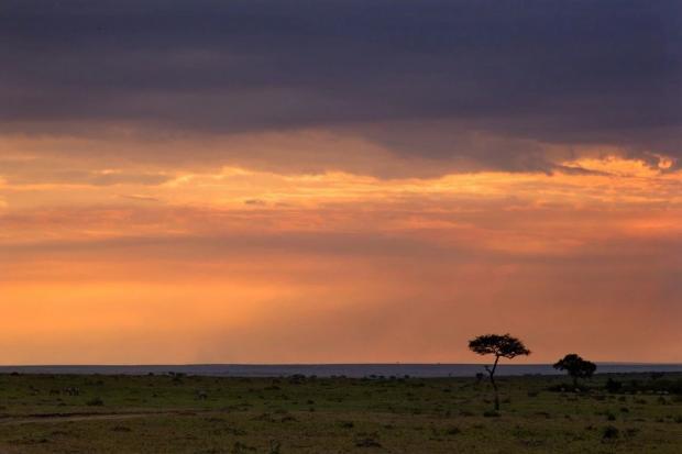 疫情下的非洲与逆行的全球化