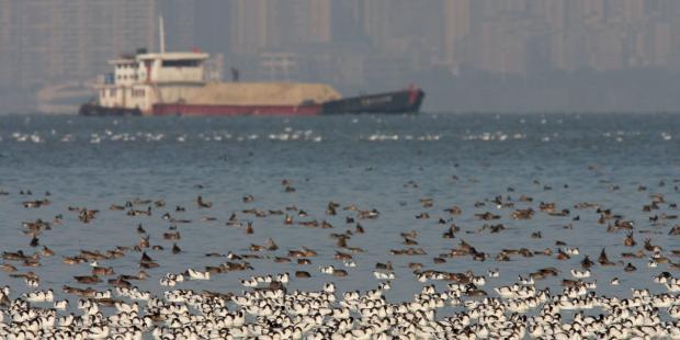 深圳湾环评造假凸显生态红线的尴尬