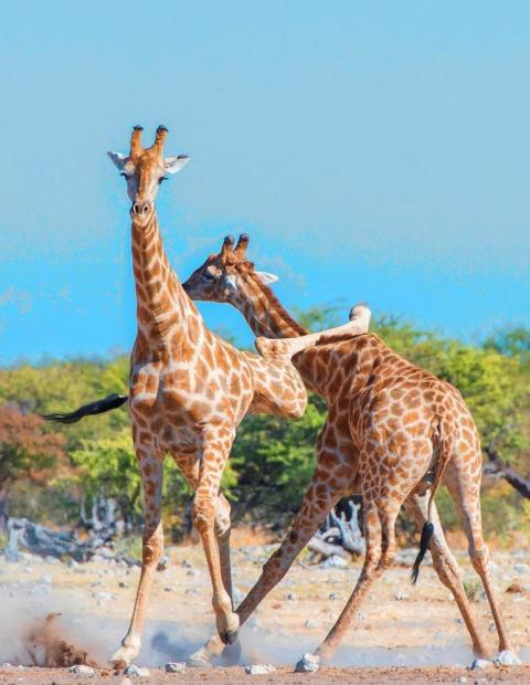给长颈鹿的睡前故事