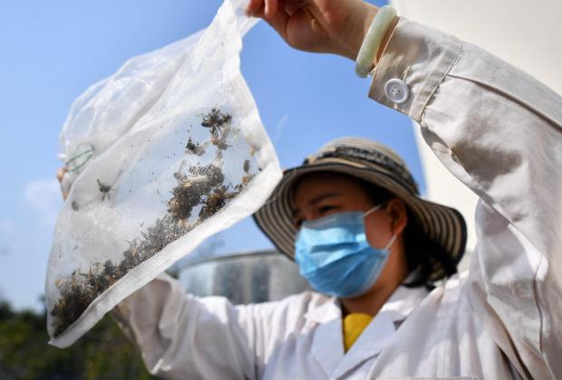 草地贪夜蛾考验中国化学农药减量决心