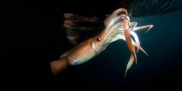 中国迈出公海自主禁渔第一步