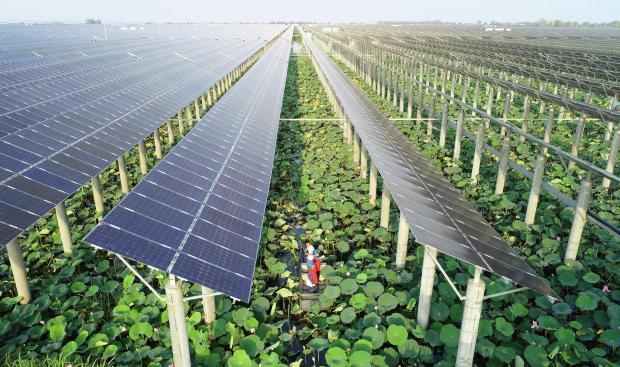 """新《能源法》可助力减轻""""一带一路""""气候影响"""