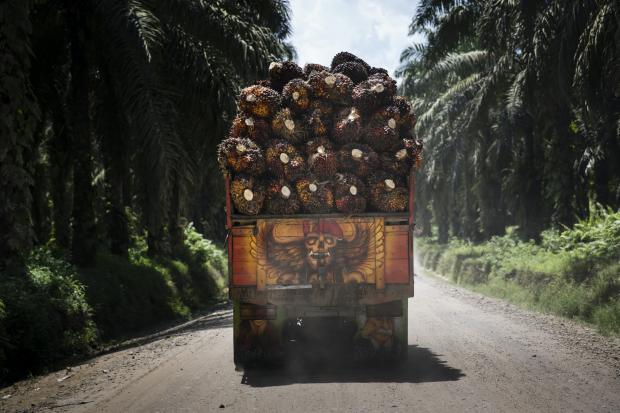 印度可持续棕榈油前路漫漫