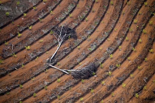 如何消除进口棕榈油的毁林风险?