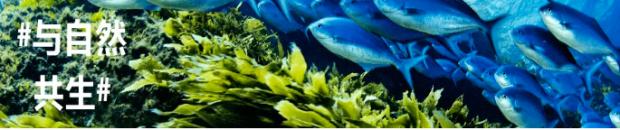 """气候变化的影响有多大?连鱼的大小变化都""""失控"""""""