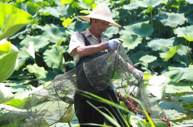 世界经济论坛倡导有利于生态的商业模式
