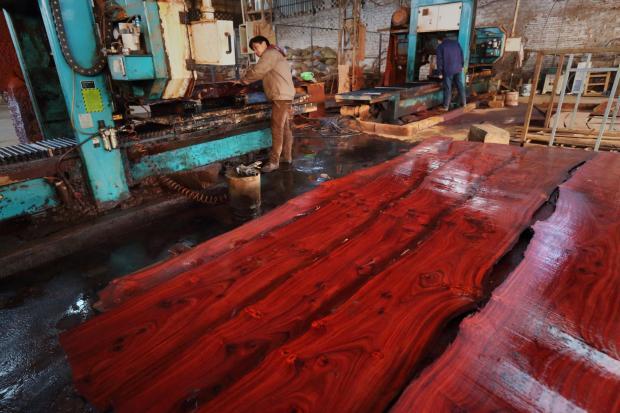 报告称冈比亚的红木非法贸易正在恶化