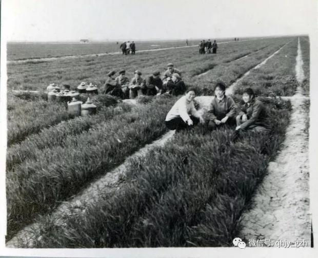 秦晖:有中国特色的化肥之路