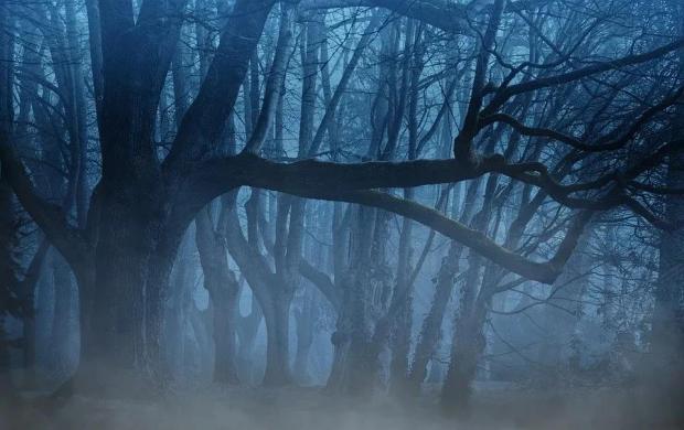 隐秘的角落:森林吐露遗体埋藏处的秘密