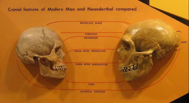 现代人体内发现渗入古人类基因:是毒药还是宝藏?