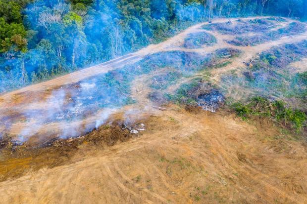 印度可以阻止东南亚棕榈油生产造成的毁林