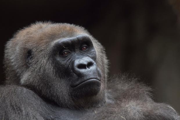 联合国报告:世界未能实现生物多样性目标