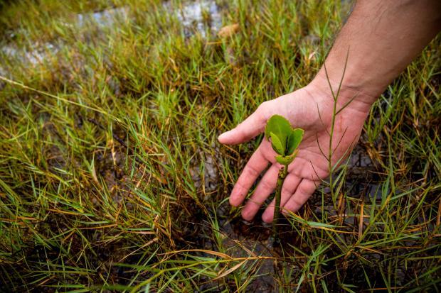 摄影之旅:守护珠三角的米埔红树林