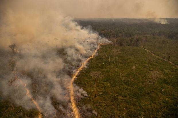 亚马逊肉类加工厂出口授权背后的生态故事