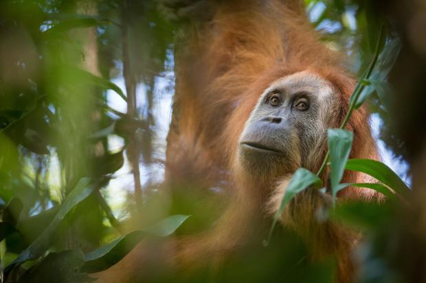 """""""一带一路""""基建项目如何兼顾生物多样性保护?"""