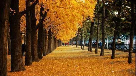 刘兴亮:北京的秋