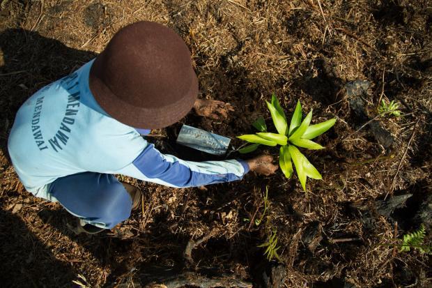 通往昆明之路:把脉生物多样性谈判进展