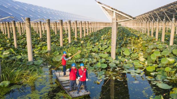 实现碳中和,中国需力促绿色金融发展