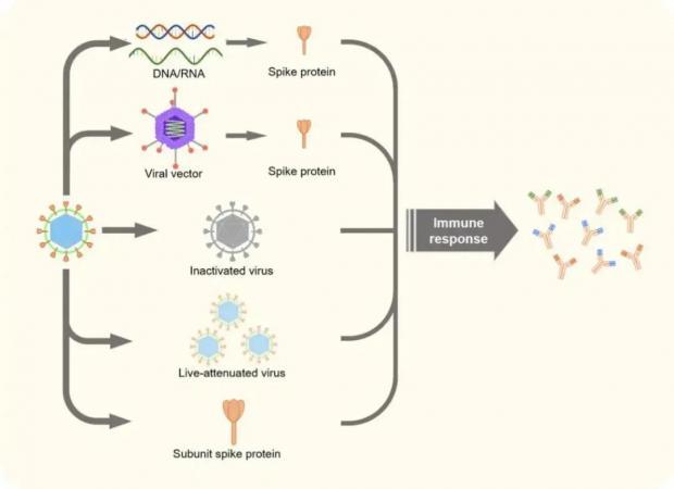 RNA疫苗或成新冠疫情终结者?