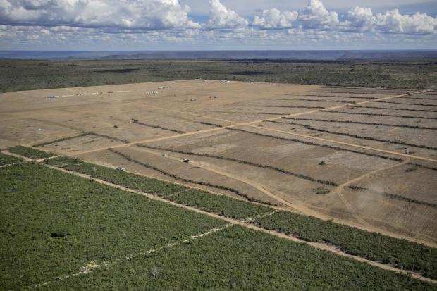 企业、政府和投资者已经拥有减少毁林的工具