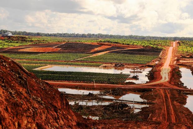 """韩国资助""""绿色""""棕榈油,加剧印尼环境社会矛盾"""