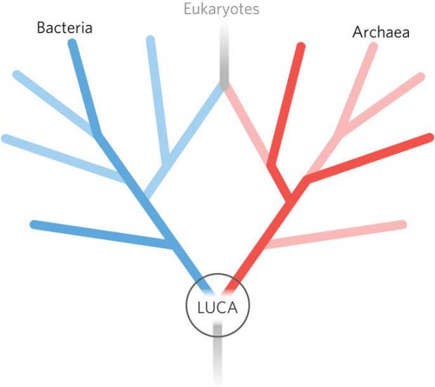 生命起源百年探索:进化论、信息论、热力学谁是主角?
