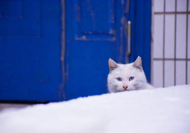 争鸣:流浪猫每年捕杀百亿野生动物研究的结论靠谱吗?