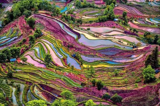 基本农田为什么会长在山上