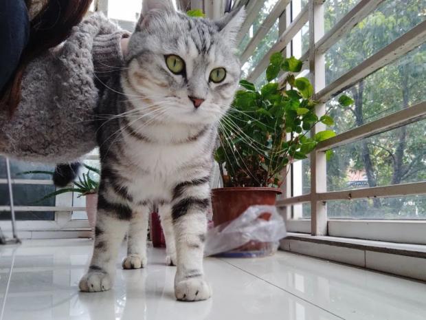 减少家猫攻击野生动物,主人可以做些什么?