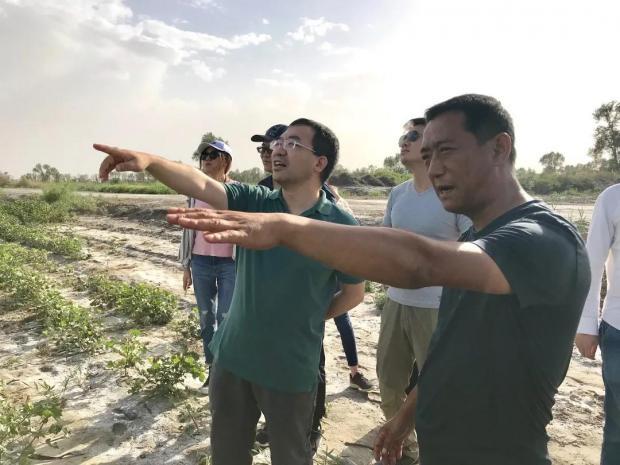 何帆:我在新疆看到了棉田里的无人机(上)