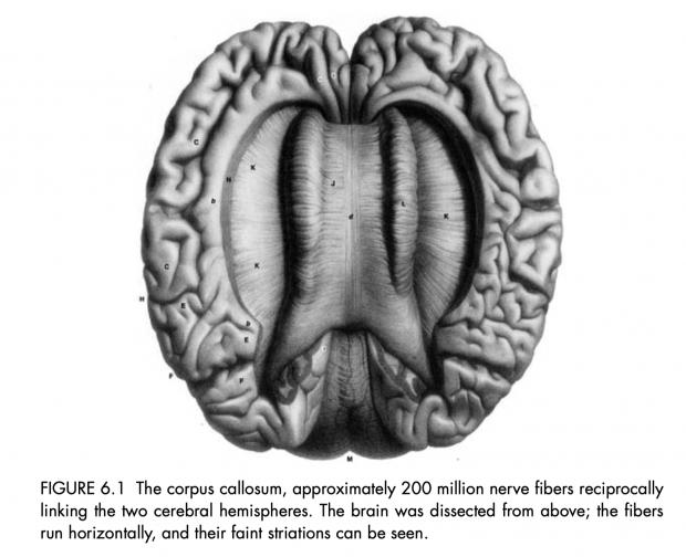 汪丁丁:从系统生物学到意识发生学 中篇