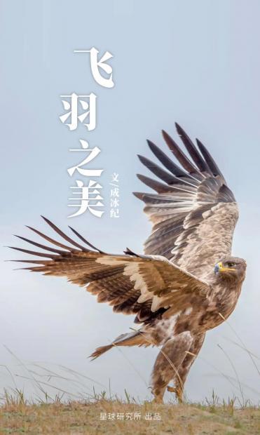 1400多种中国鸟,你认识多少?