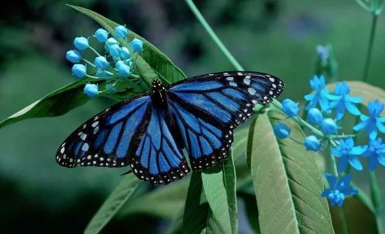 现代家庭的力量:帝王蝶与人类的相似之处