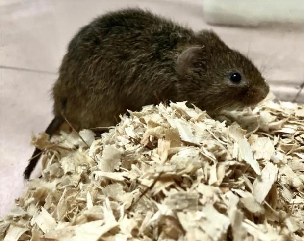 """""""偷拍""""老鼠8年,终于发现了它和植物种子间的秘密"""