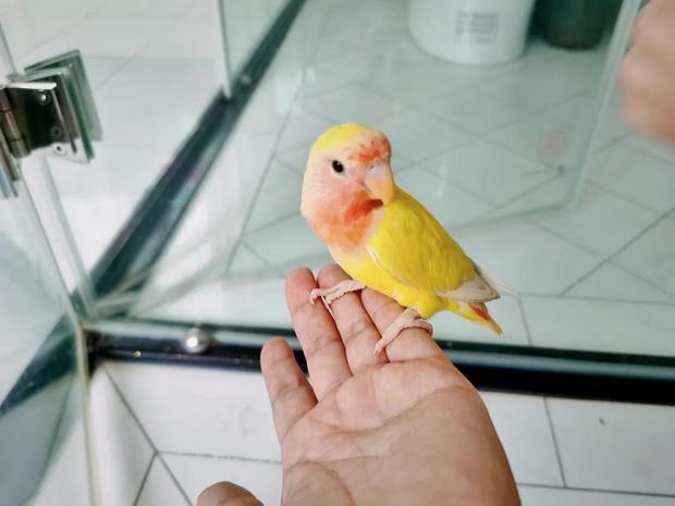 刘兴亮:鹦鹉失踪记