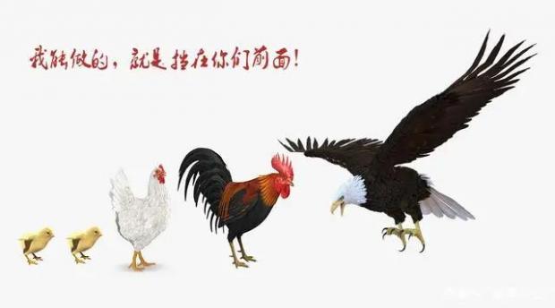 骟公鸡以当妈妈实践中的科学方法论之谜
