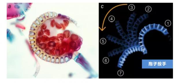 蛤,向植物学习如何运动?