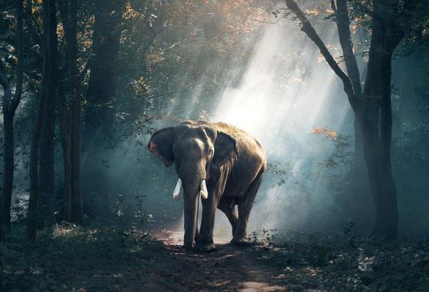 野生动物到底携带多少人兽共患病原?