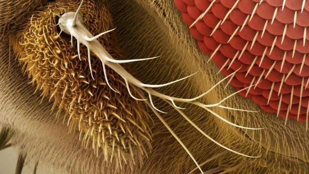 嗅觉神经元是如何成为气味管理大师的?