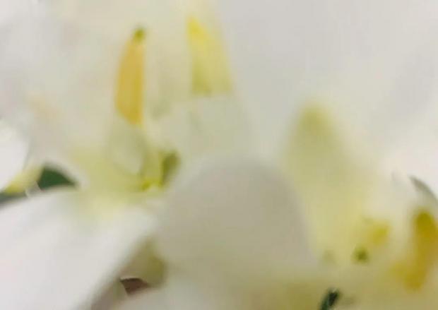 玫瑰不是唯一的花丨第六章  变故