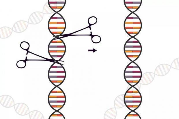 中国学者发现的迷你版CRISPR-Cas基因编辑系统,有何精巧之处?