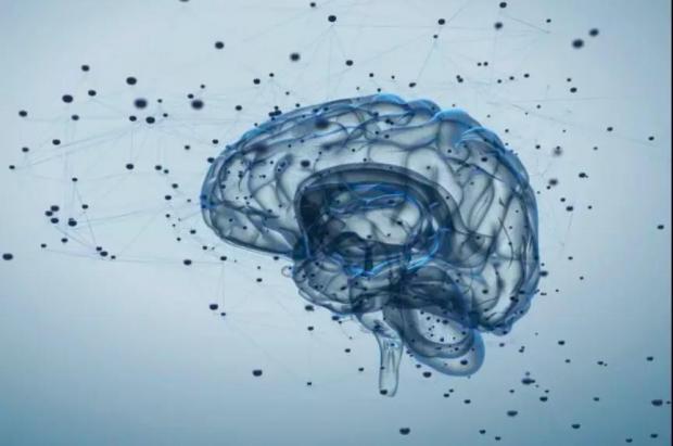脑的进化:更大的脑容量预示更高的智能水平?