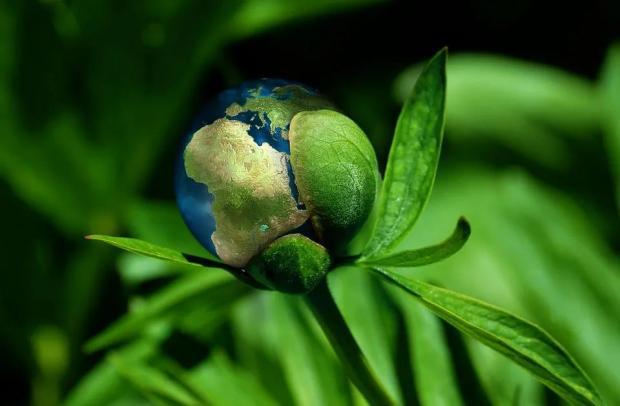 为什么要关注生物多样性价值的主流化?| COP15特别策划